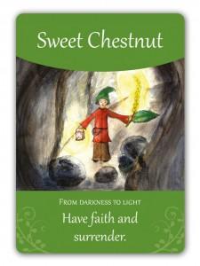 sweet_chestnut