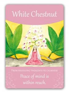 white_chestnut