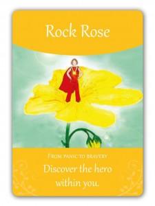 rock_rose