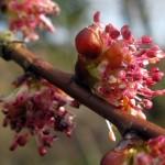 Elm - Flori Bach - Terapia Florala Bach by Raluca