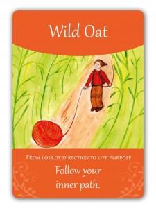 wild_oat